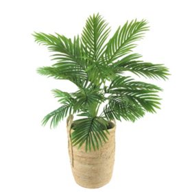 "Faux 42"" Palm in Handwoven Organic Seagrass Basket"