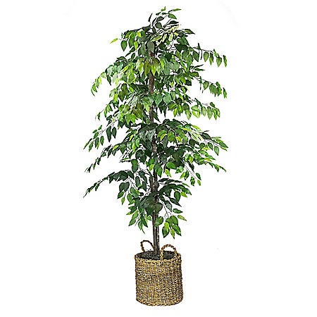 Faux 6' Ficus Tree in Roped-Style Handwoven Basket