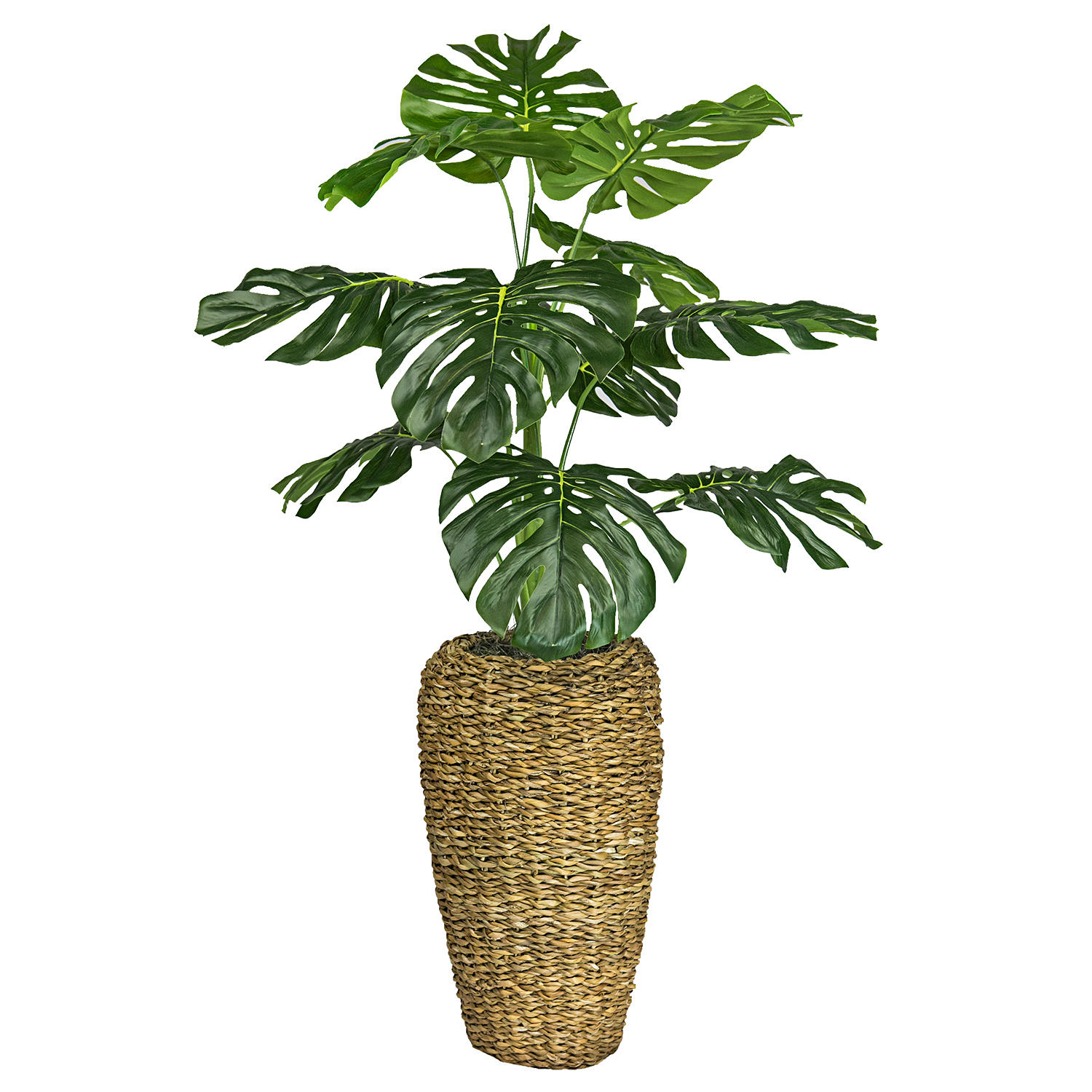 LCG Sales 4' Monstera in Handwoven Urn-Style Basket