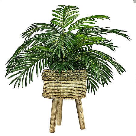 "Faux 32"" Phoenix Palm in Tri-Colored Tripod Basket Stand"