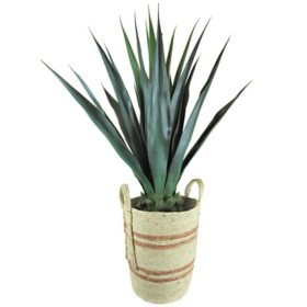 """Faux Agave 42"""" (Assorted Colors)"""
