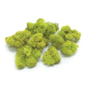 Raindeer Moss (2 pk., 16 oz. ea.)