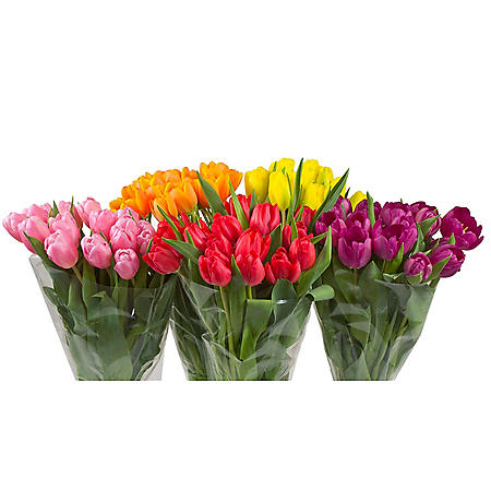 Tulips, 15 stems (variety and colors may vary)
