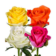 Roses, Assorted Bright Colors (100 stems)