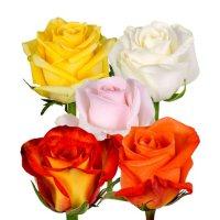 Roses (Choose from 6 varieties; 125 stems)