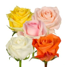 83175c729 Bulk Roses For Sale - Sam s Club