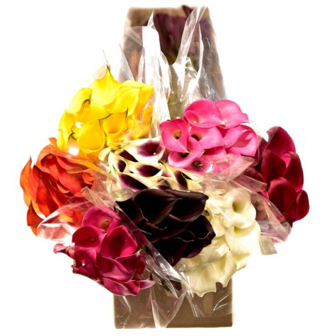 Calla Lily, Assorted Colors (60 stems)