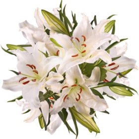 5 Stem Super Select Oriental Lily, 50 stems (variety and colors may vary)