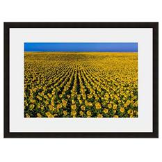 Framed Fine Art Photography - Endless Sunflowers By Blaine Harrington