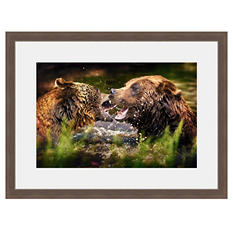 Framed Fine Art Photography - Brawling Bears By Jordan Stern