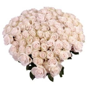 Roses, Vendela with 6 cm Blooms (96 stems)