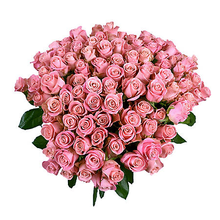 Roses, Light Pink with 6 cm Blooms (96 stems)