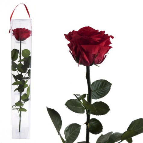 Premium Preserved Amorosa Single Stem Rose, Red (1 ea.)