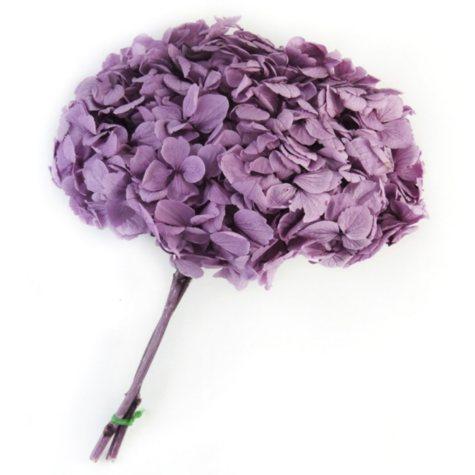 Preserved Hydrangeas - Lavender - 45 Stems