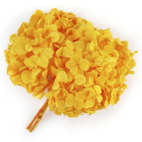 Preserved Hydrangeas, Yellow (45 stems)