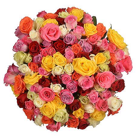 Prewrapped Rose Bouquets, Assorted Colors (8 bouquets)