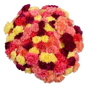Prewrapped Carnations, Assorted Colors (15 bunches)