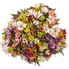 Prewrapped Alstroemeria Bouquets, Assorted Colors (16 bouquets)