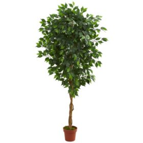 6' Artificial Ficus Tree