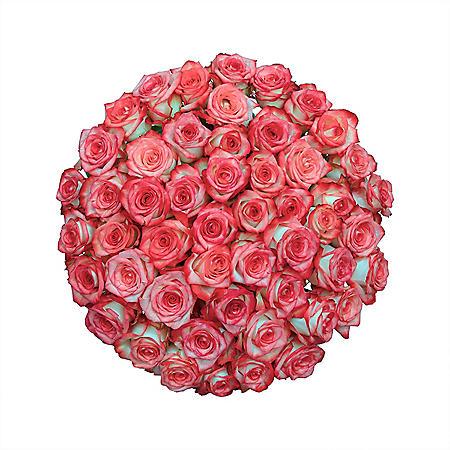 Premium Roses (Choose from 21 varieties; 50, 100, 150 stems)