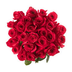 Rainforest Alliance Certified Roses, Hot Pink (100 stems)