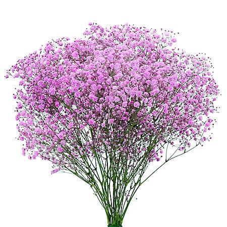 Gypsophila, Pink Glitter (choose stem count)