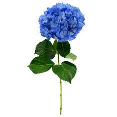 Hydrangea Painted Dark Blue (Choose stem count)