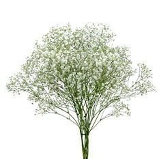 Gypsophila Tinted - Silver (Choose Stem Count)