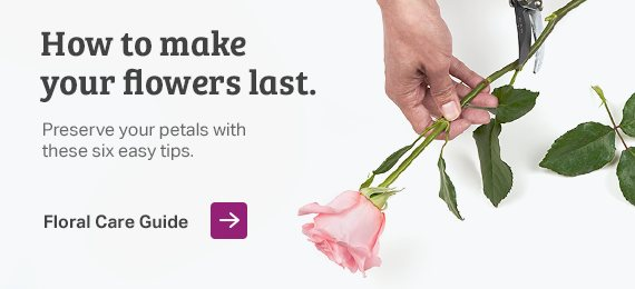 Read the Sam's Club Floral Care Guide and learn how to make your flowers last with 6 easy tips.